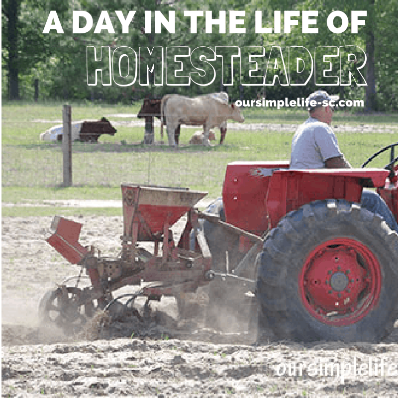 A day in the life of a homesteader