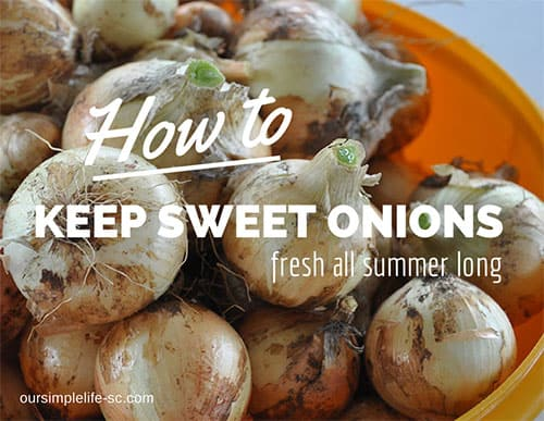 How to keep sweet onions fresh all summer long