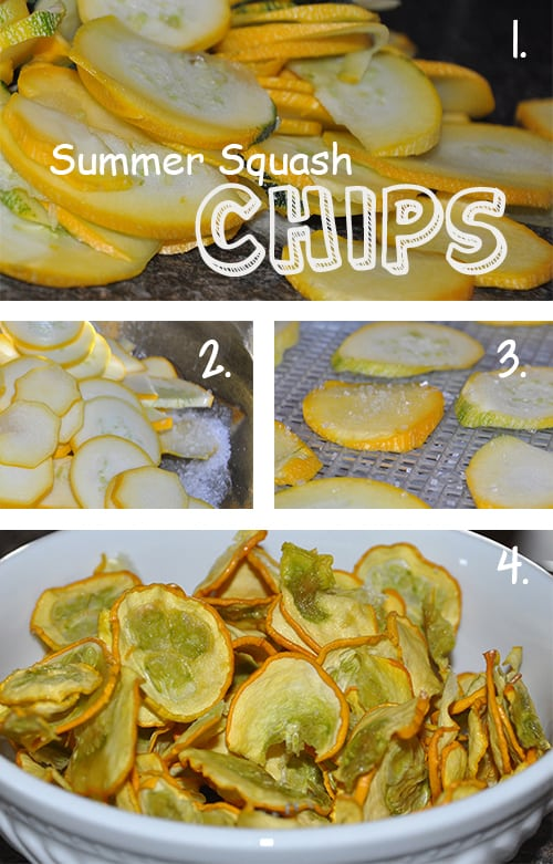Dried Summer Yellow Squash Chips