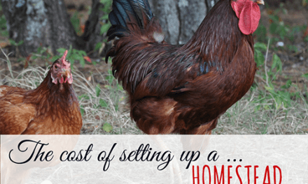 Cost of Setting up a Homestead