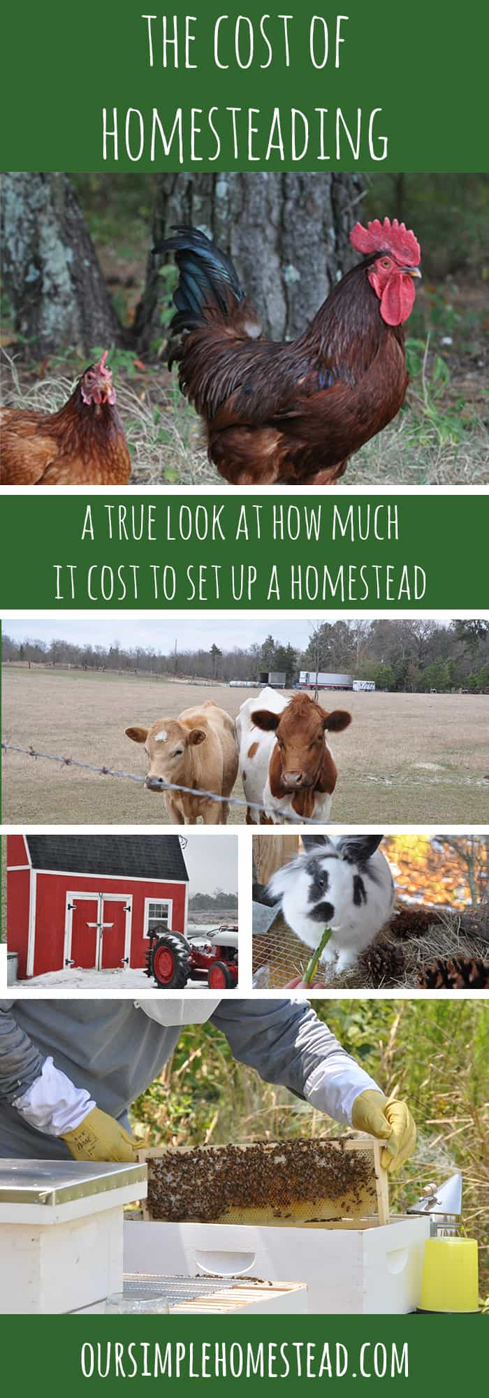The Cost of Setting up a Homestead