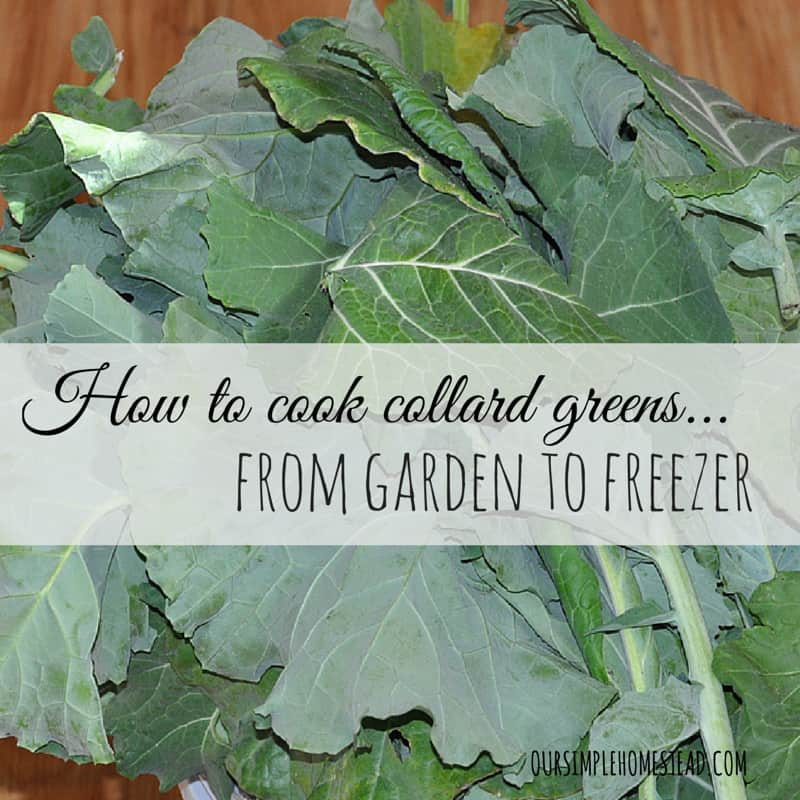 How to Cook Collard Greens – From Garden to Freezer