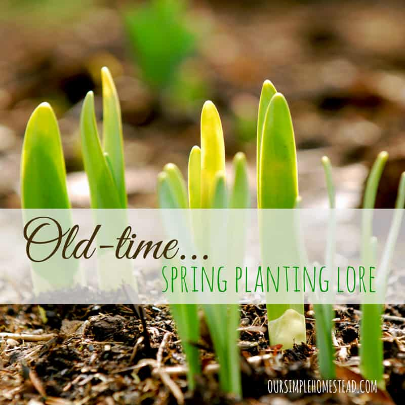 Old Time Spring Planting Lore
