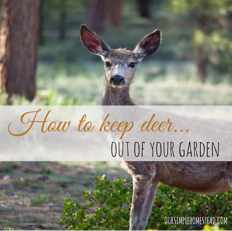 to Keep Deer Out of Your Garden