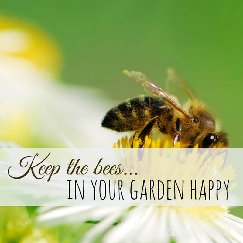 Keep the Bees in Your Garden Happy