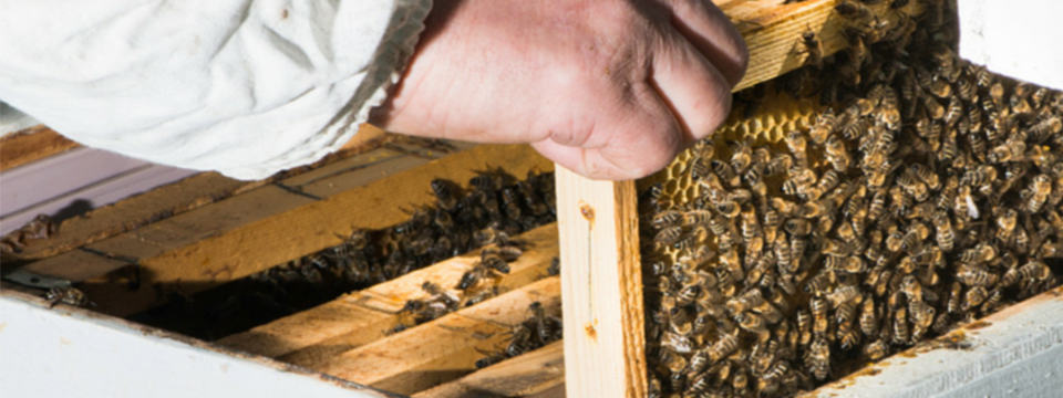 Beginner Beekeeping Supply List – Enjoy Honey All Year Long