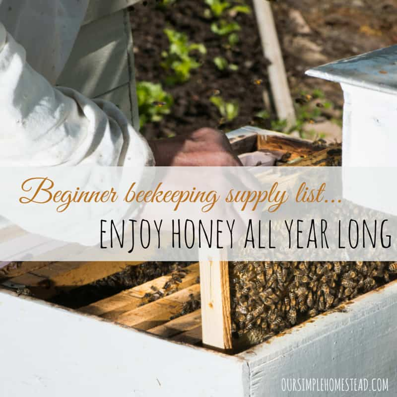Honey 101- Spring is the perfect time to start a hive