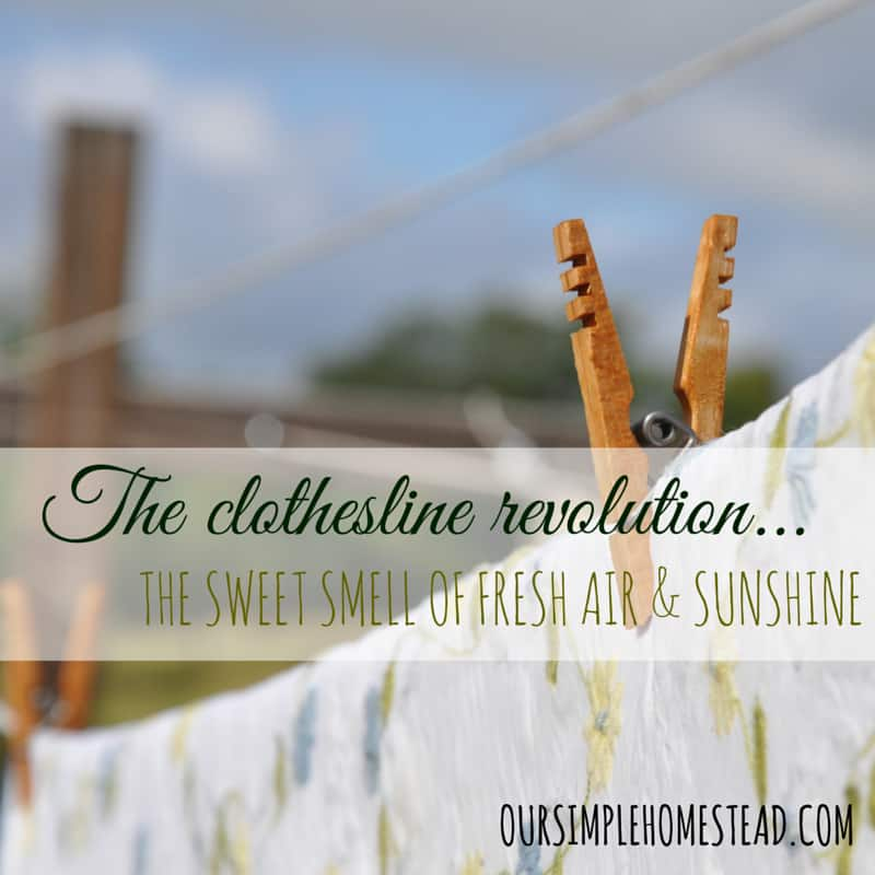 Old Fashioned Clothesline Revolution