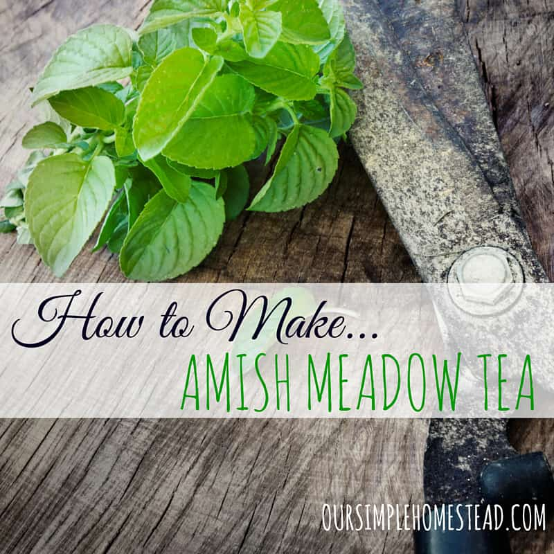 How to make Amish Meadow Tea