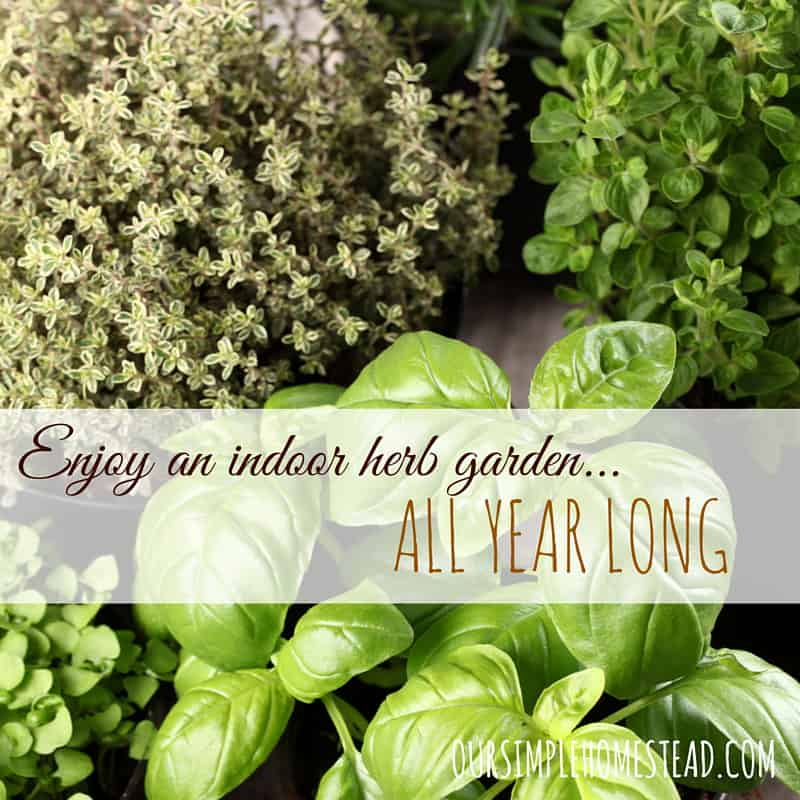 Enjoy Fresh Herbs All Year Round With An Indoor Herb Garden