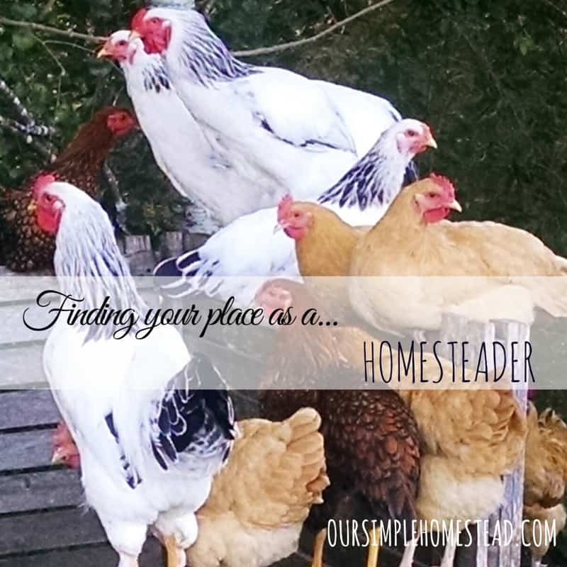 Finding your place as a homesteader.