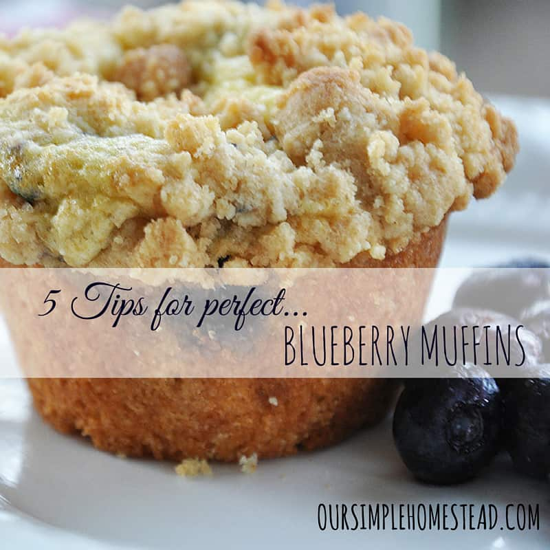 Tips for Perfect Blueberry Muffins