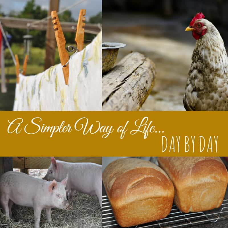 A Simpler Way of Life – A Walk Through My Day