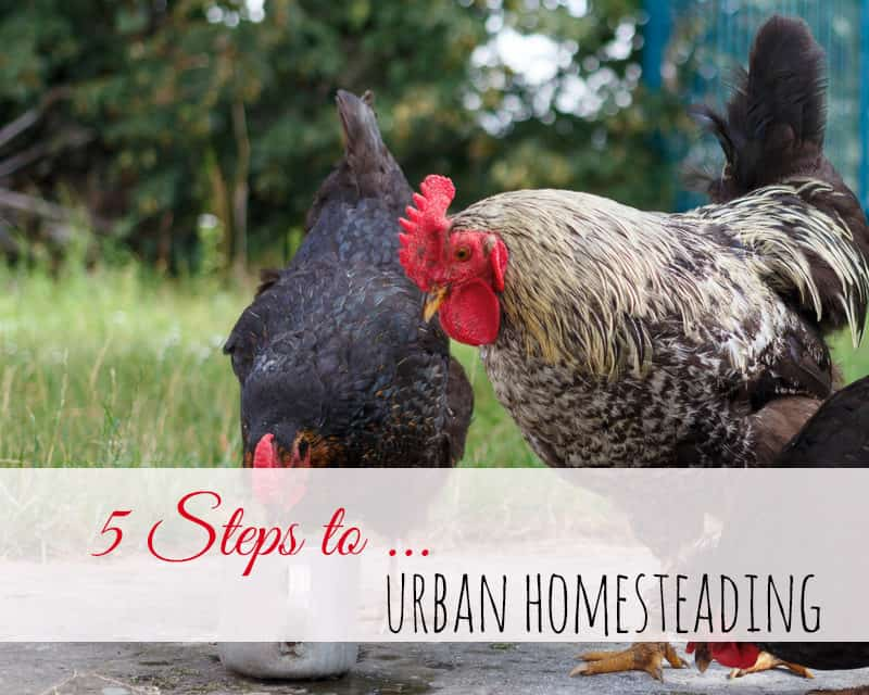 5 Steps To Urban Homesteading