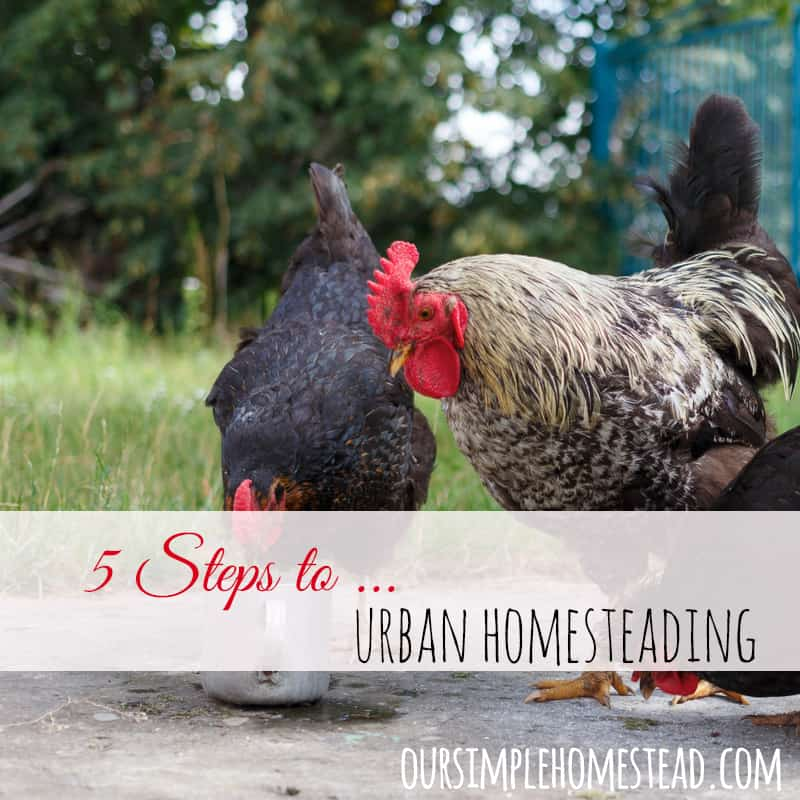 urban homesteading