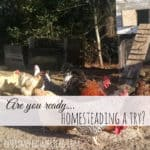 Are you ready to give homesteading a try?
