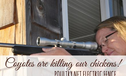 Coyotes are killing our chickens! – Poultry Net Electric Fence