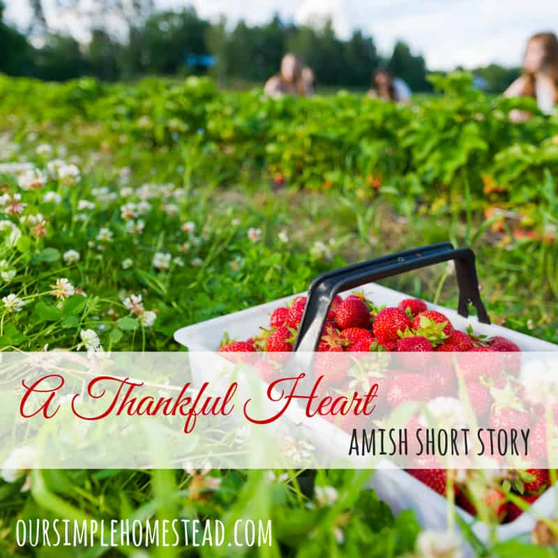 Amish Short Story – A lesson in how to have a thankful attitude