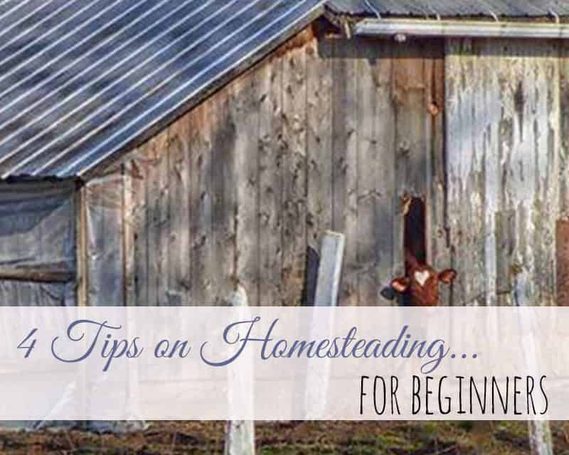 4 Tips on Homesteading for Beginners