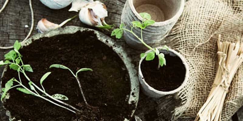 25 Vegetable Gardening Tips + Old-time Planting Lore