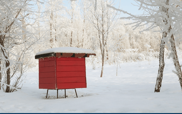 Winter in the Apiary – Winter Beekeeping Basics