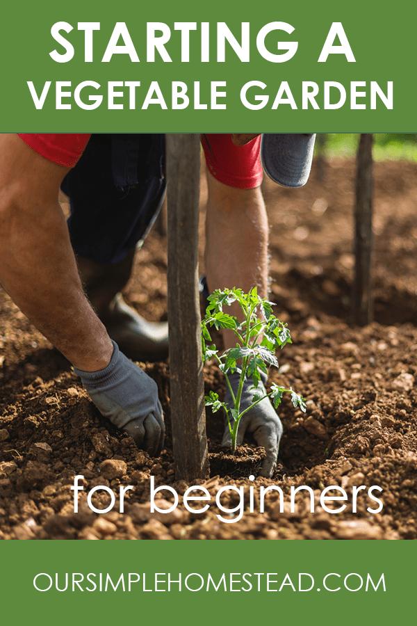 Starting a Vegetable Garden for Beginners